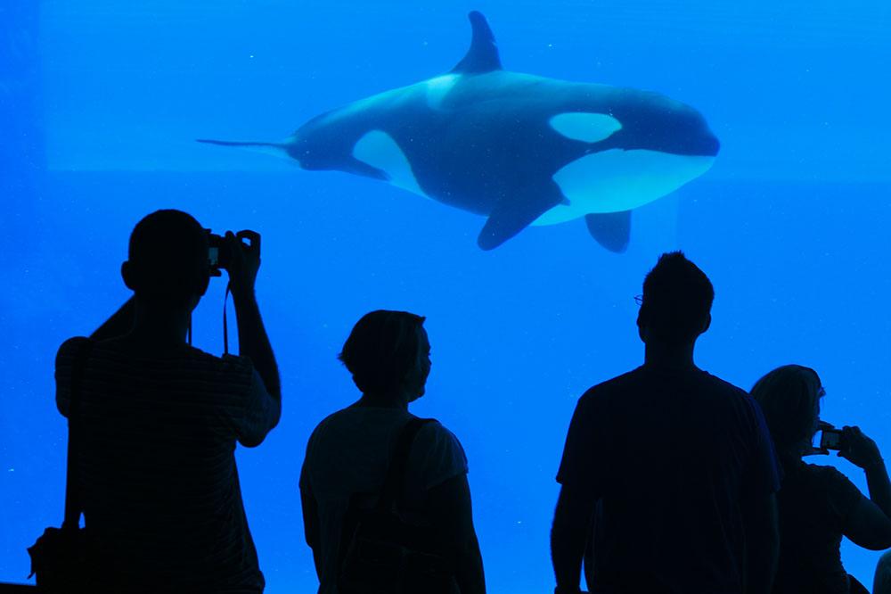 Cetacean Captivity